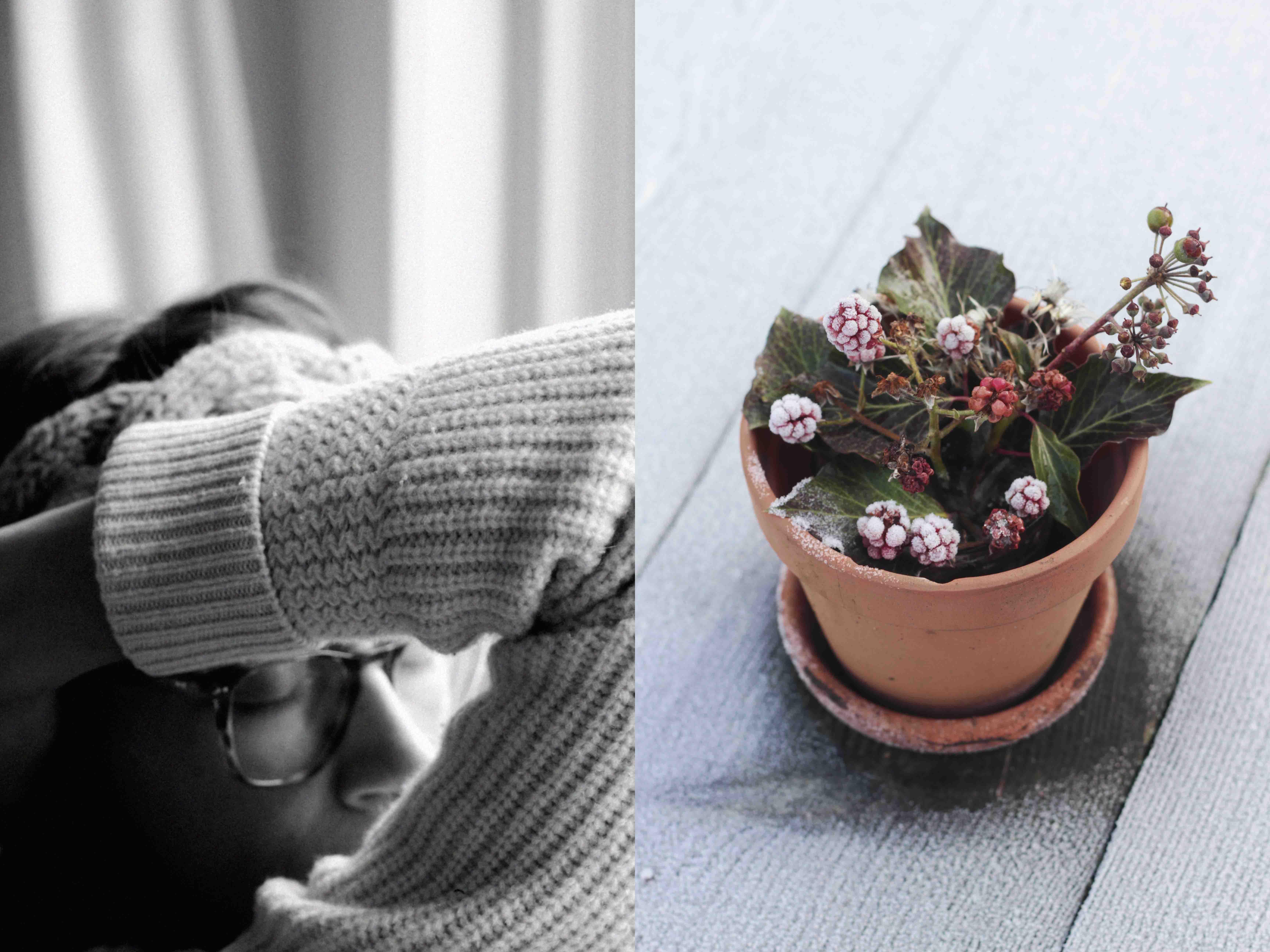 seasonal-eating-december-wool-frost