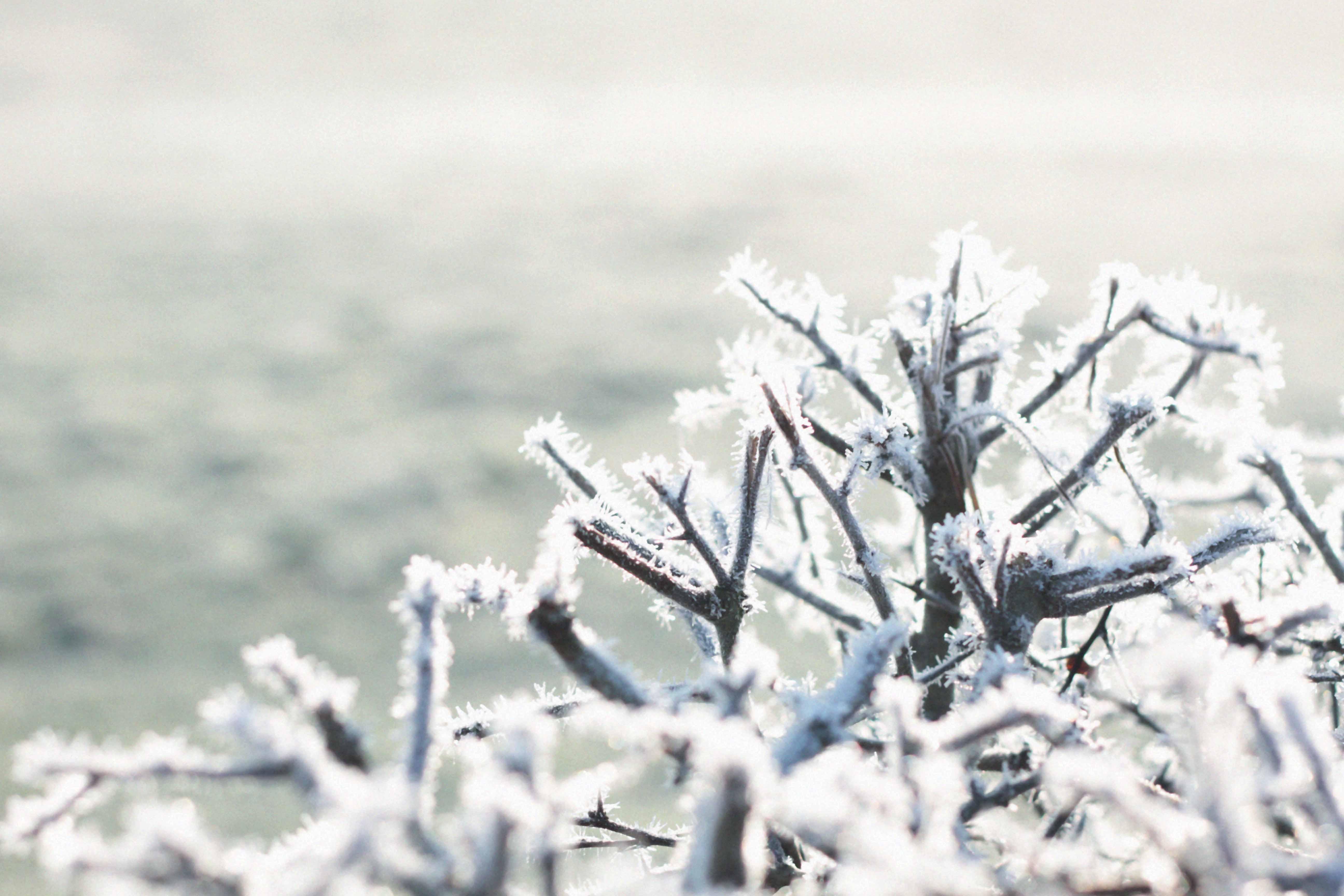 winter seasonalliving frost winterblues winterdip bluemonday
