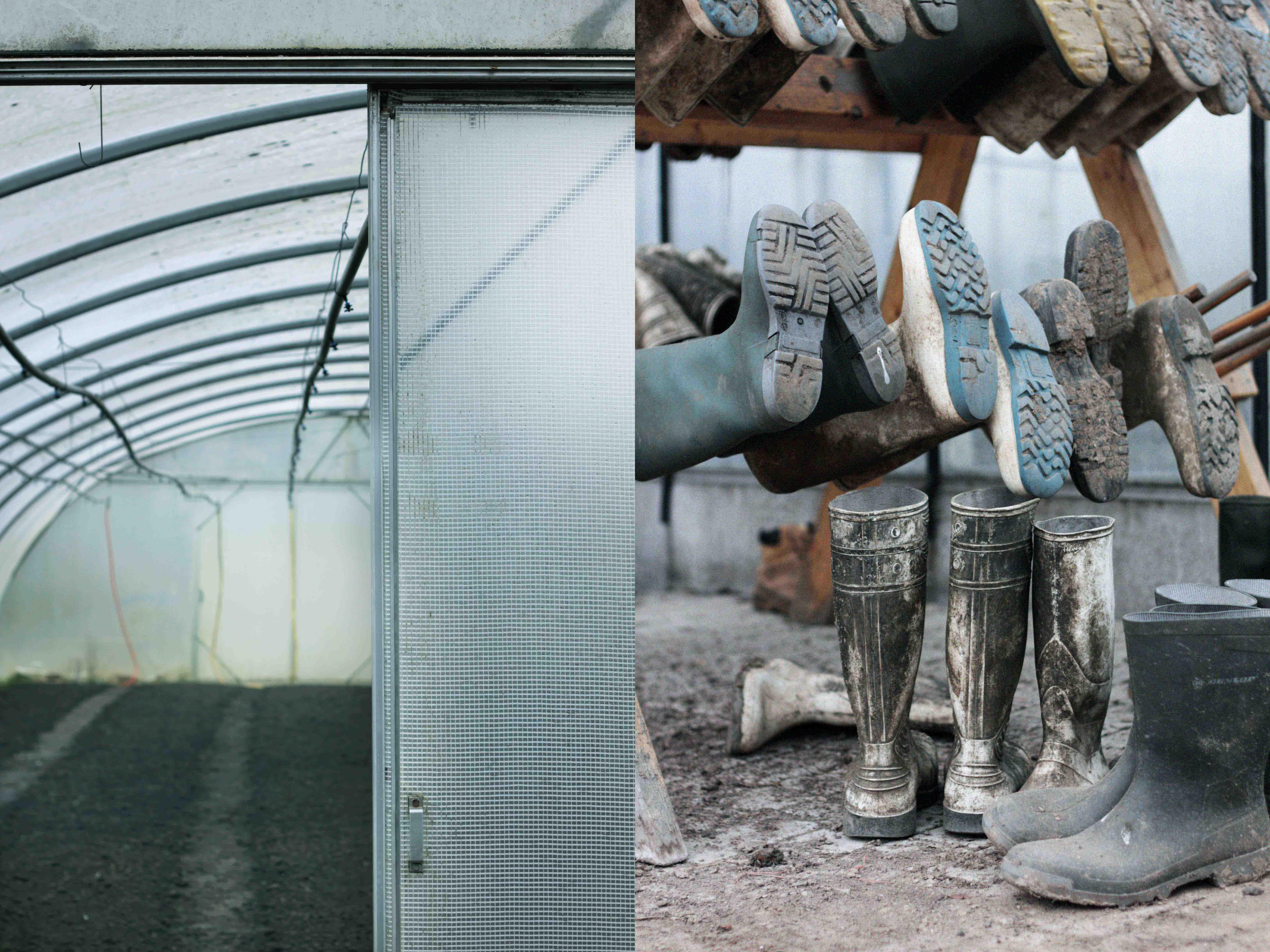 rainboots greenhouse